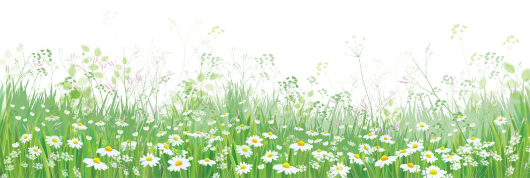 Vector  blossoming flowers  field, nature border isolated.