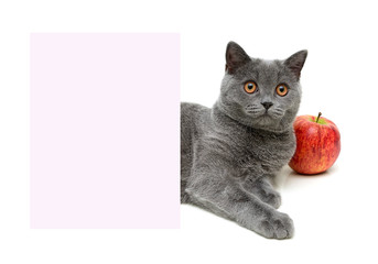 gray cat and a red apple over a banner on a white background