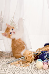Kitten in the curtains