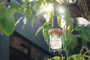 Hanging Lamp on tree.