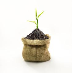 Tree on sack.green concept