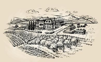 Farm sketch. Farming, agriculture, vineyard. Vector illustration