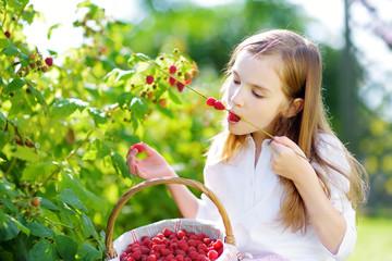 Cute little sisters picking fresh berries on organic raspberry farm on sunny summer day