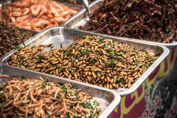 Thailand fried insects