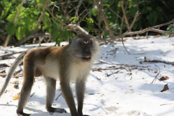 monkey on beach
