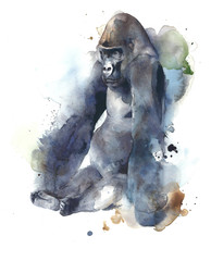 Gorilla ape monkey big creature mammal sitting watercolor painting illustration isolated on white background