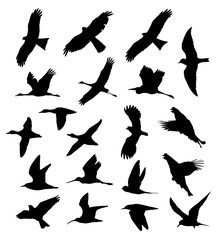 Birds in flight set silhouettes