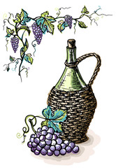 Watercolor bottle of wine in wicker basket and grape isolated on white in graphic style hand-drawn vector illustration.
