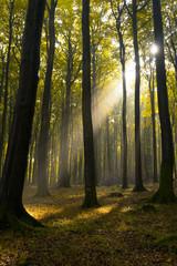 Sonnenlicht im Laubwald