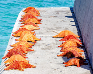 Starfish for sale on the dock in Nassau, Bahamas