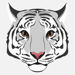 Light gray Tiger