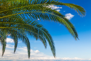 a palms leaves on the blue sky background