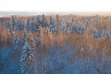 Areal view of evergreen forest at golden hour
