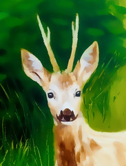 painting of young deer in wild landscape with high grass. Eye contact. watercolor effect.