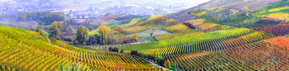 Spoed Fotobehang Honing amazing vast plantation of grape in Piemonte- famous vine region of Italy