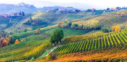 Wall Murals Vineyard amazing vast plantation of vineyards in Piemonte- famous vine region of Italy