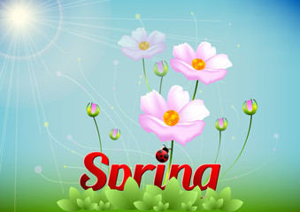 Spring positive postcard for congratulations with beginning of spring. Pink spring flowers on meadow on blue background. Vector illustration