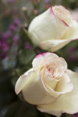 White and Pink Roses mixed with Purple Waxflower as a Holiday Gi