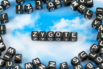 The word Zygote on the sky background