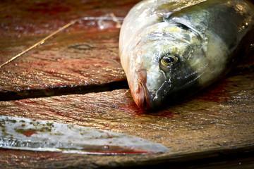 Frischer Fisch auf dem Fischmarkt in Tokyo / Japan