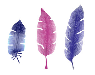 Drawn by pencil and watercolor blue and purple set of feathers, illustration by hand