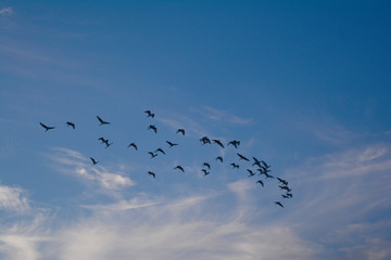 many bird on the sky in evening