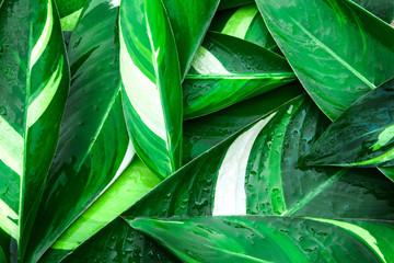 Mokra Świeża tropikalna zieleń opuszcza tło
