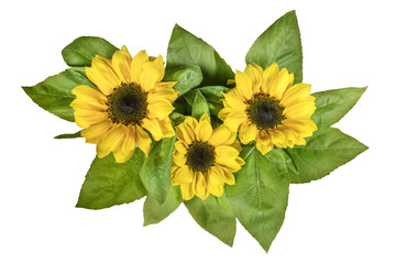Yellow sunflowers with green leaves, isolated on white