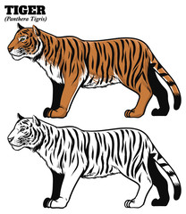 hand drawing style of tiger