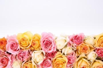 カラフルな薔薇の背景素材