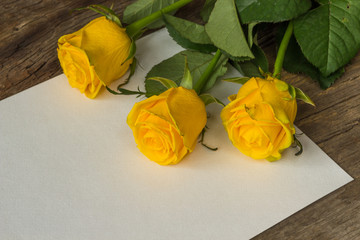 Yellow roses flower on empty piece of paper.