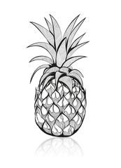 Zeichnung einer Ananas. Handgezeichnete tropische Frucht