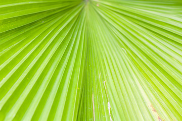 Green nature palm tree leaf background, Selective focus.