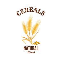 Wheat ear cereals vector isolated icon