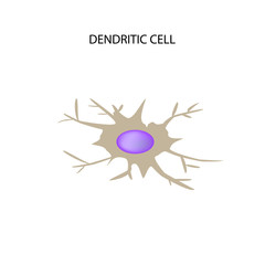 Dendritic cell immunity. Infographics. Vector illustration on isolated background
