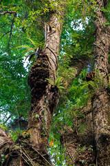 Rainforest in Nosy Mangabe, Madagascar wilderness