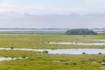 Photo sur Aluminium Pôle Puddles and birds at farm