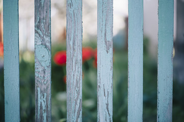 Old wooden blue fence in the suburban area