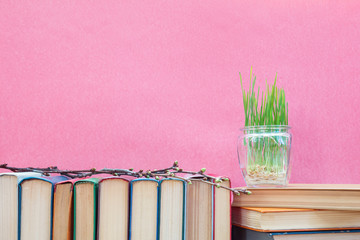 Young seedlings of green wheat sprouts, germinated wheat in glass jar on books over pink background. Agriculture education concept.