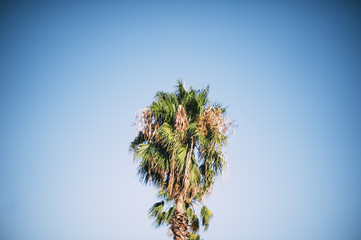 Palm tree on the clear sky background