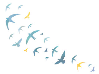 Birds in the sky – Background