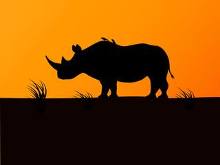 Vector black rhino silhouette background sunset