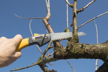 Obstbaumschnitt - mit der Handsäge