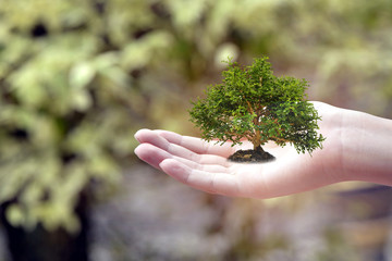 Plant on boy hand and nature background , Ecology concept .