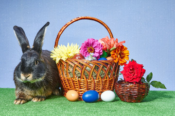 Cute rabbit sitting beside Easter basket with colored eggs and flowers