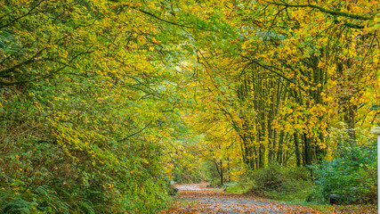 The path through the trees in the park in autumn. The road in the forest. Bright colors of fall.