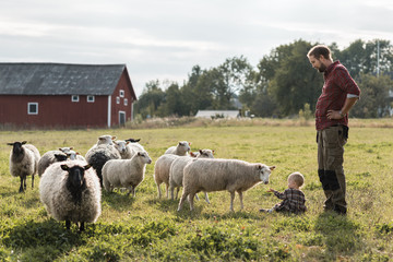 Father looking at daughter playing with sheep on field at farm
