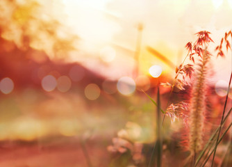 Romantic nature view of grass flower and sunset for valentine