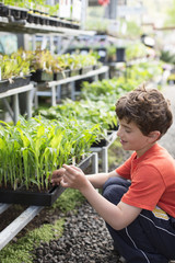 Boy selecting plants in nursery