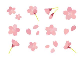 桜のイラスト セット